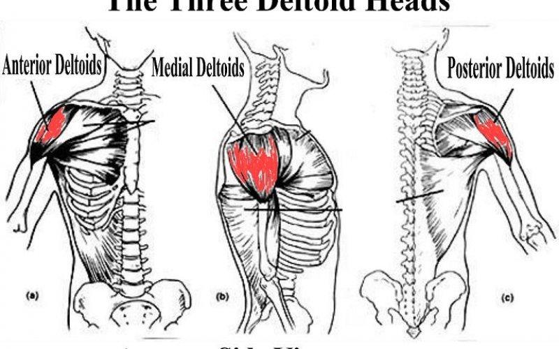 Подобряване на страничните делтоидни упражнения за мускулен растеж